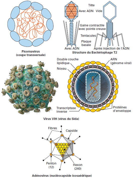 Micro Organismes Pathog 232 Nes Degremont 174