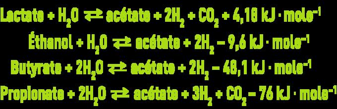 Biochimie microbiologie - acétogénèse