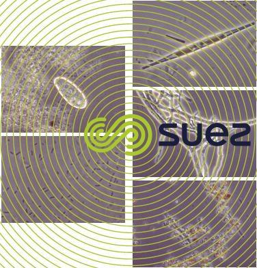 Protozoaire biofilm - algues - bactéries - minéraux - moisissure